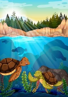 Tartarugas nadando sob o oceano