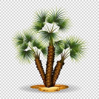 Tema de jardinagem com palmeira