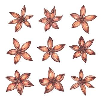 Tempero de anis estrelado em aquarela. conjunto de ilustrações desenhadas à mão pintada de anis estrelado e sementes.