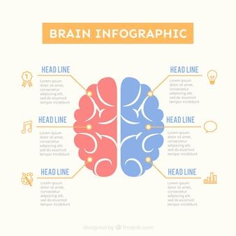 Template infográfico cérebro em cores pastel