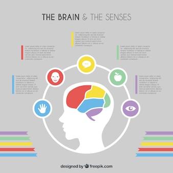 Template infográfico cérebro plano com detalhes de cores