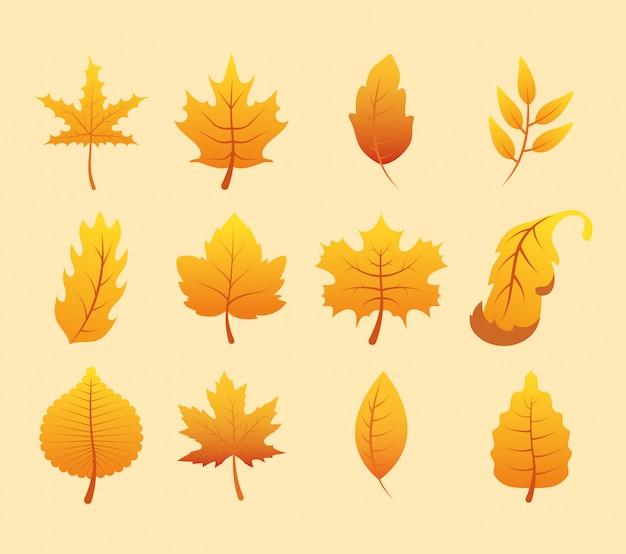 Temporada de outono conjunto de ícones de folhas