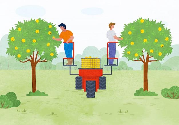 Temporada de outono, pessoas colhendo maçãs no jardim