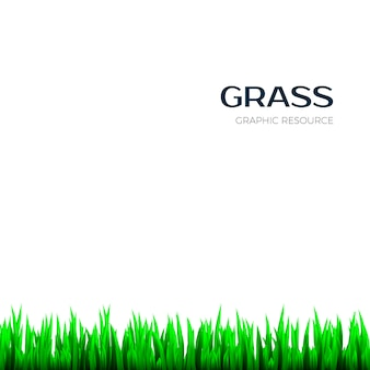Textura da grama. quadro de botânica de erva horizontal realista para banner. ilustração