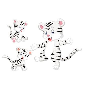 Tigre branco de bebê fofo