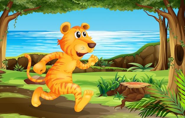 Tigre correndo no parque