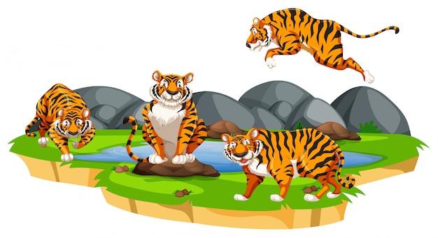 Tigre isolado na natureza