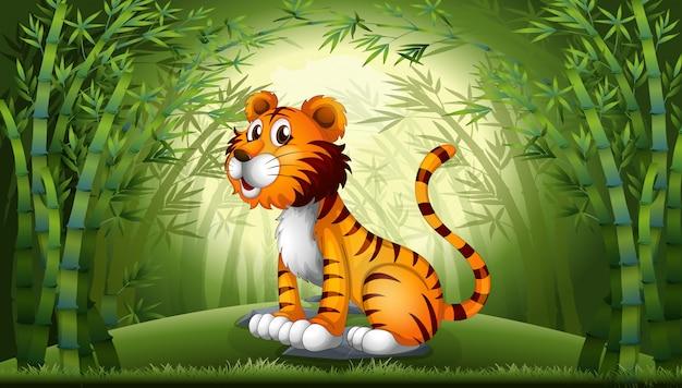 Tigre na floresta de bambu