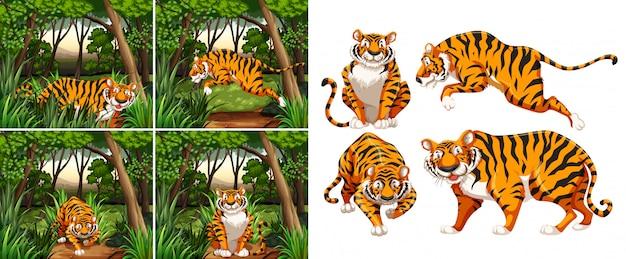 Tigre na floresta