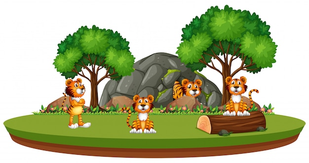 Tigre na natureza isolada