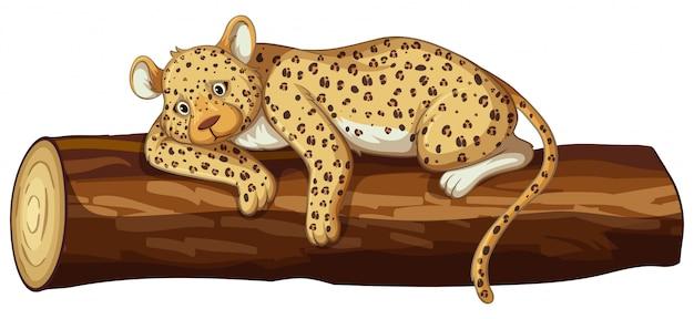 Tigre triste em branco