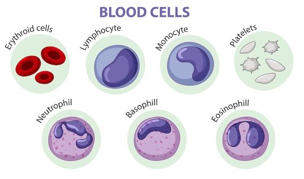 Tipo de células sanguíneas