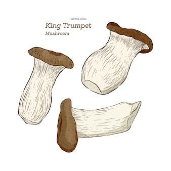 Tipo de cogumelo rei trompete ilustração vetorial