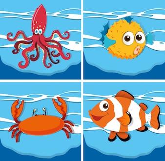 Tipo diferente de animais marinhos