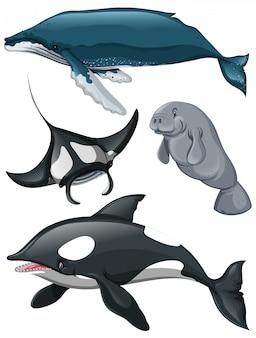 Tipo diferente de baleias e peixes