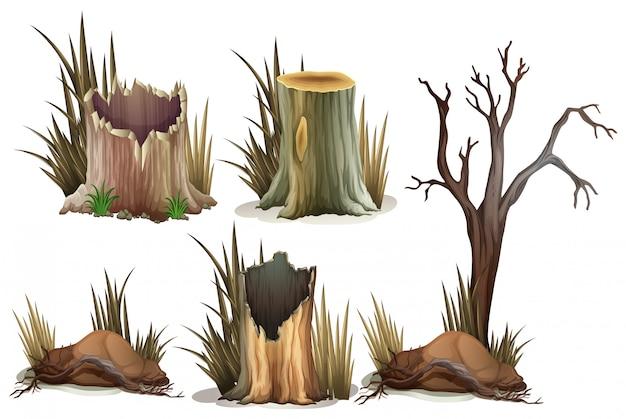Tipo diferente de toco de árvore