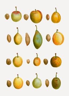 Tipos comuns de ameixa
