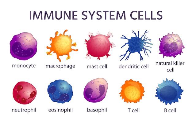 Tipos de células do sistema imunológico. macrófago dos desenhos animados, células dendríticas, monócitos, mastócitos, células be t. imunidade adaptativa e inata, conjunto de vetores de linfócitos. ilustração de microbiologia imunológica, defesa imunológica de vírus