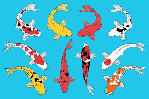 Tipos de peixes koi