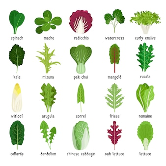 Tipos de salada