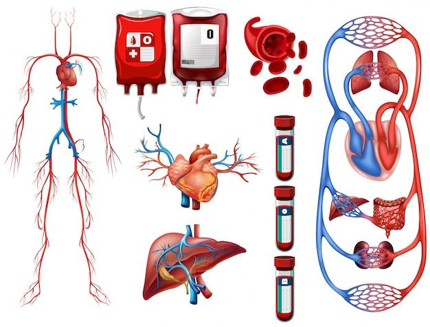 Tipos de sangue e ilustração do sistema de respiração