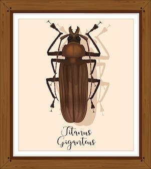 Titanus giganteus em moldura de madeira