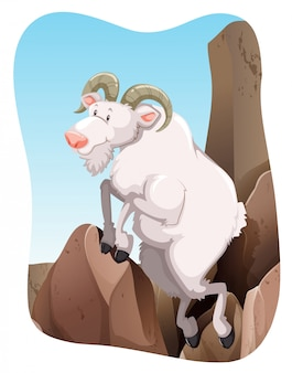 Tn_goat_mountainfbd_02