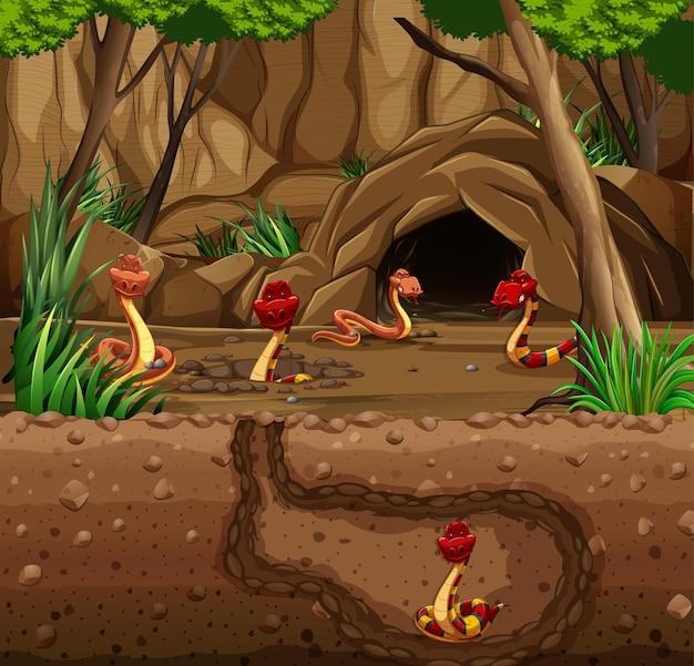 Toca de animais subterrânea com família de cobras