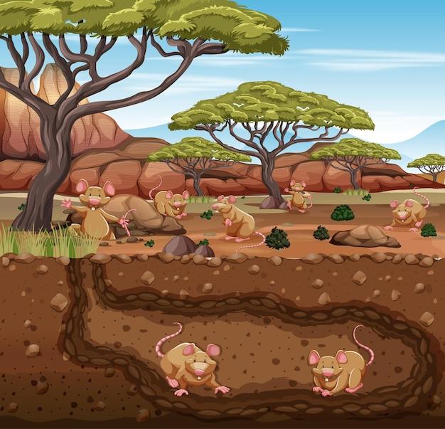 Toca subterrânea de animais com família de ratos