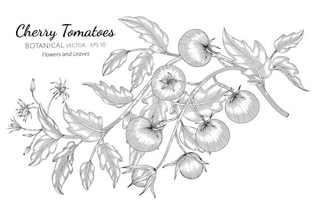 Tomate cereja desenhado à mão ilustração botânica com arte de linha