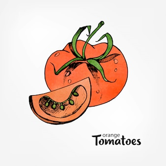 Tomate laranja. inteiro e parte de um corte. mão desenhada ilustração colorida com textura aquarela.