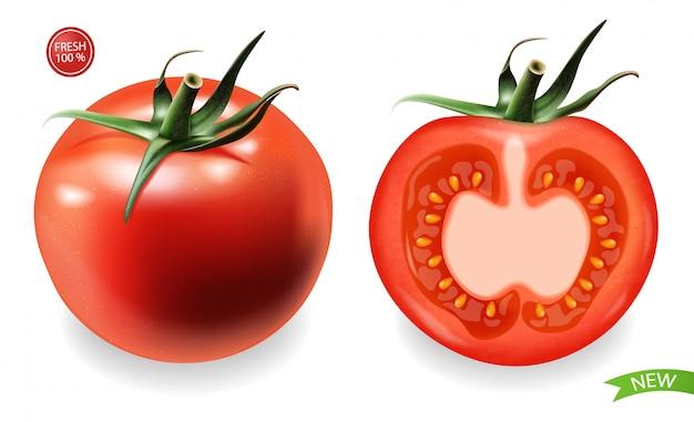 Tomate realista isolado, produto fresco, comida vegetariana, ilustração