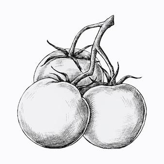 Tomates frescos desenhados à mão