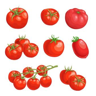 Tomates frescos dos desenhos animados. vegetais inteiros vermelhos em. tomates frescos de fazenda individual e em grupo. ilustrações em fundo branco.