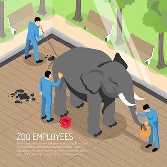 Trabalhadores do zoológico com ferramentas profissionais durante a alimentação e lavagem de elefantes e a limpeza de sua casa isométrica