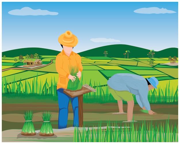 Trabalho do agricultor no arrozal