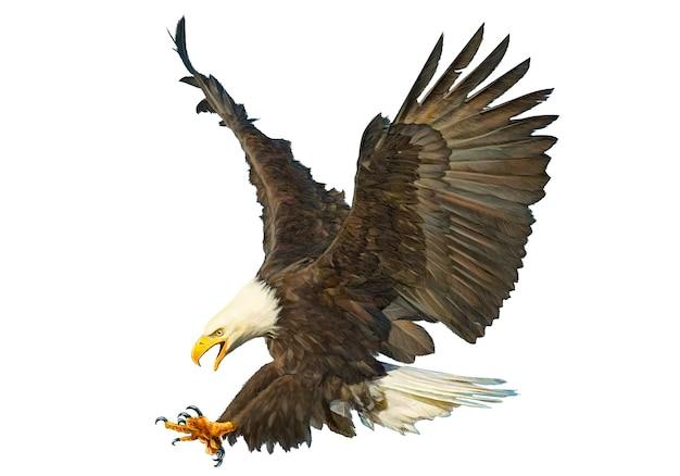 Tração da mão do ataque da águia americana no fundo branco.
