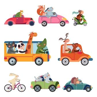 Transporte de animais. carro divertido dos desenhos animados, motoristas viajando. engraçado urso girafa raposa dirigindo ônibus, caminhão de táxi. conjunto de vetores de corrida de zoológico de infância. animais de carro e motorista, ilustração de máquina de condução infantil