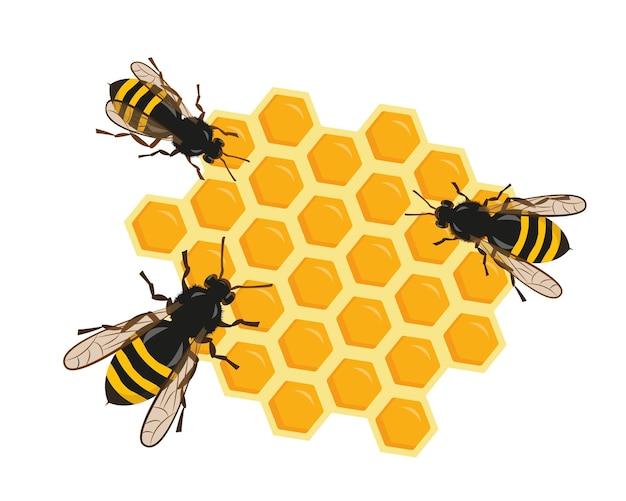 Três abelhas em favos de mel em fundo branco.