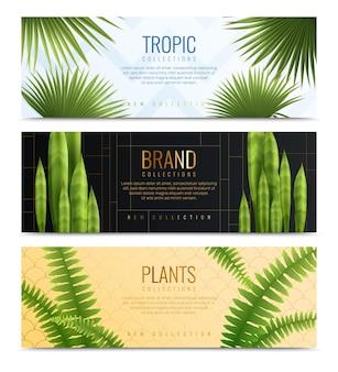 Três banners de plantas caseiras