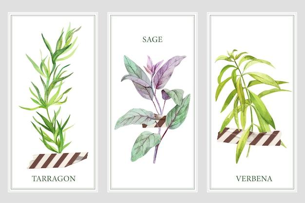 Três banners verticais com ervas para cozinhar e fita adesiva