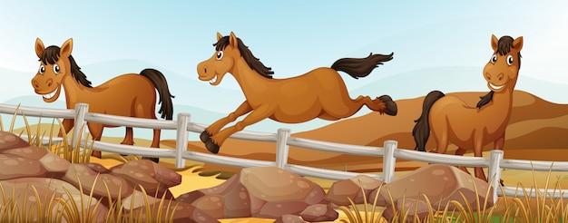 Três cavalos no campo