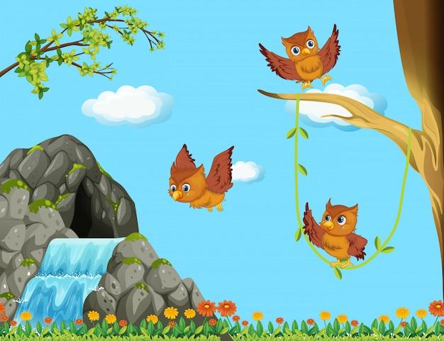 Três corujas voando na cachoeira