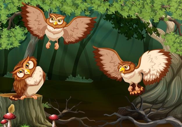 Três corujas voando na floresta
