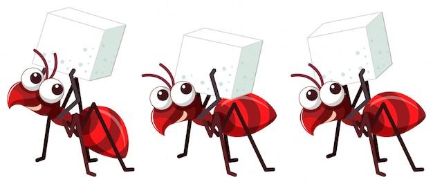 Três formigas vermelhas com cubo de açúcar