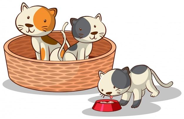 Três gatos em fundo branco