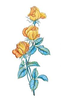 Três lindas rosas amarelas isoladas