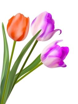 Três lindas tulipas, isoladas no branco.