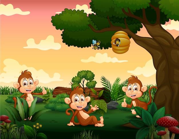 Três macacos brincando no parque