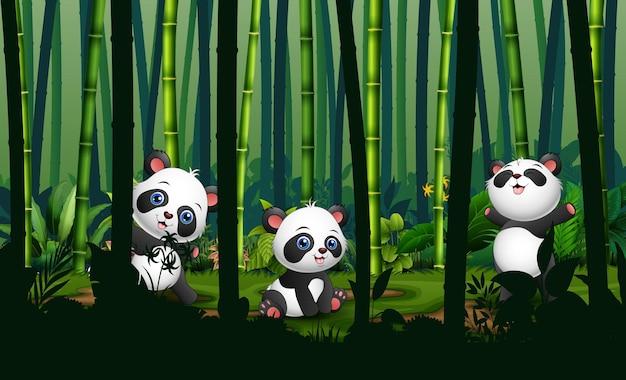 Três pandas fofos na floresta de bambu